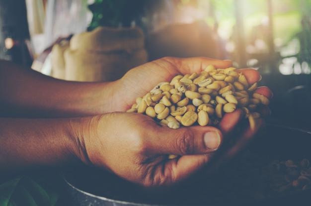 Cà phê decaf tách caffeine trước khi rang xay